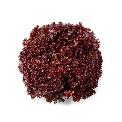 Alface Crespa Vermelha Rosanna [Rouge]