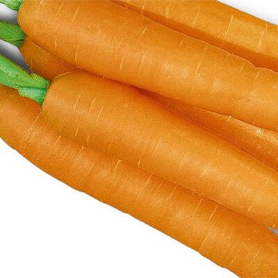 Cenoura Inverno