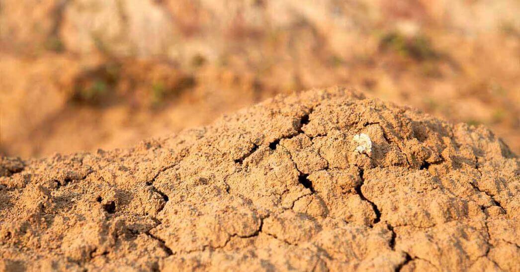 Como aumentar a produtividade no solo arenoso