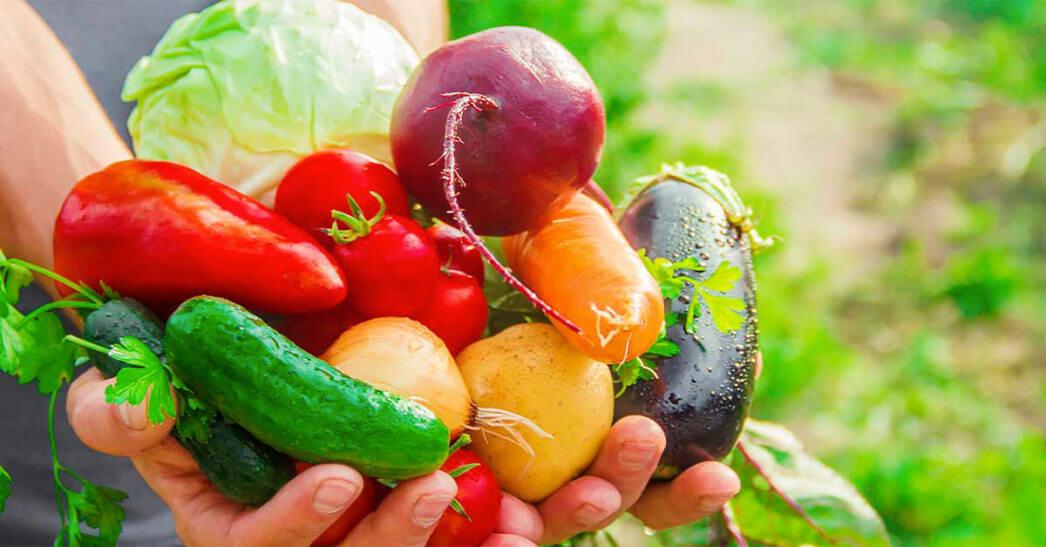 Como fazer o cultivo correto de hortaliças?