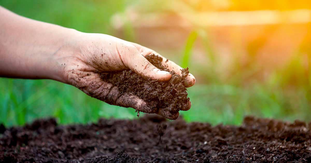 Como preparar o solo para cultivo de hortaliças?