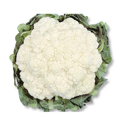Couve-flor Teresópolis Gigante
