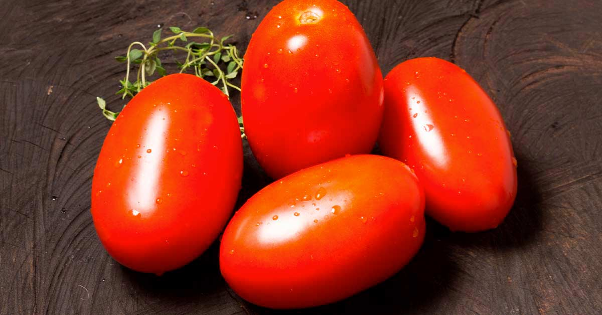 Dicas para evitar doenças no tomate