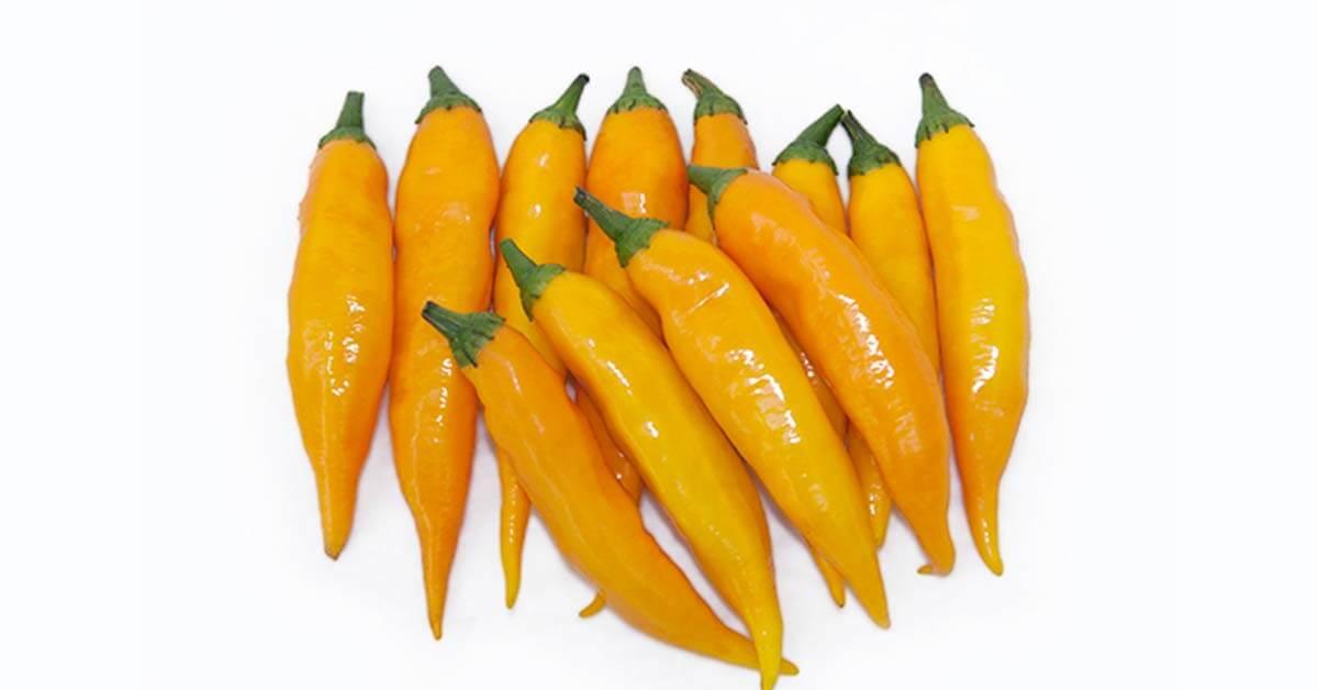 Mexicali e Leon. Novas cultivares para apimentar 2012.