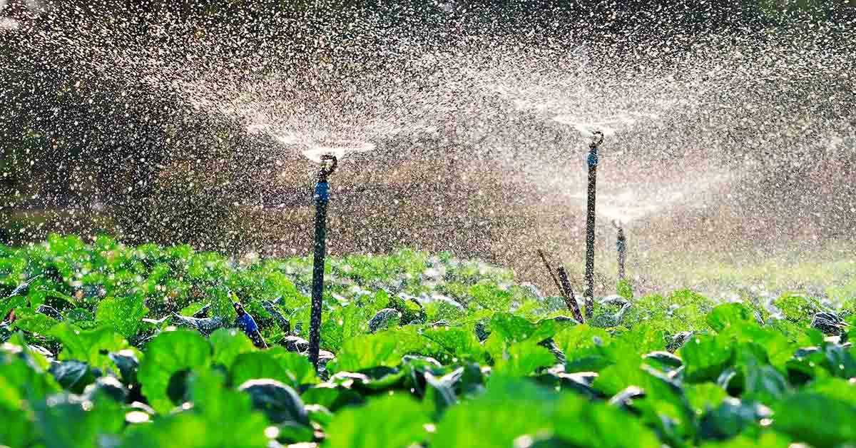 Sistema de irrigação: O que é e Cuidados