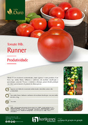 Folheto Tomate Híb. Runner