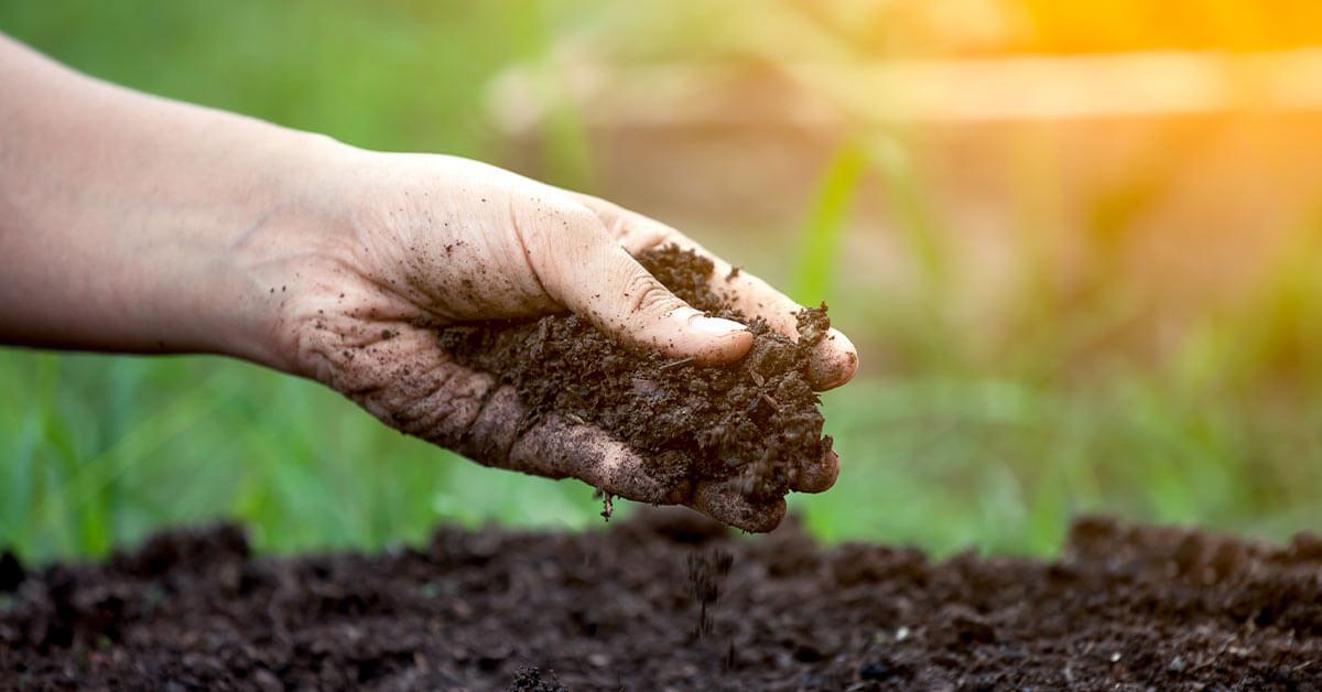 3 Tipos de Adubos Orgânicos para sua Plantação